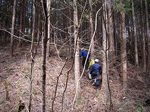 分収造林の視察実施